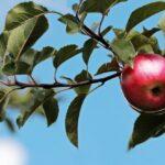 mela frutta verdura di stagione podere francesco abruzzo teramo