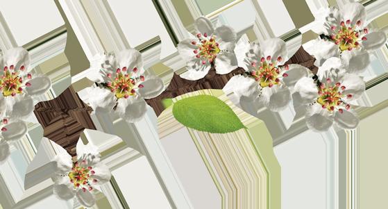 Fiori Decorativi Bianchi Frutti Podere Francesco Abruzzo