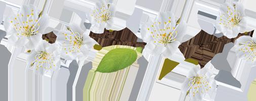 Ramo con fiori bianchi Podere Francesco Abruzzo